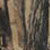 Forest_Camo